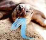 鉱物のクラゲと間違えてビニール袋を食べてしまい、結果、消化不良で死んでしまう亀が続出